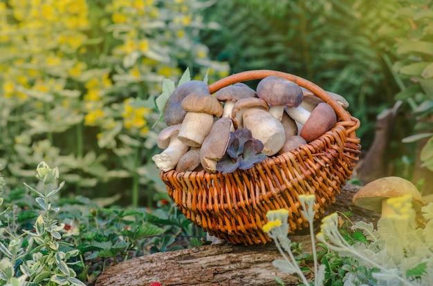 Basket with mushrooms. delicious organic mushroom.