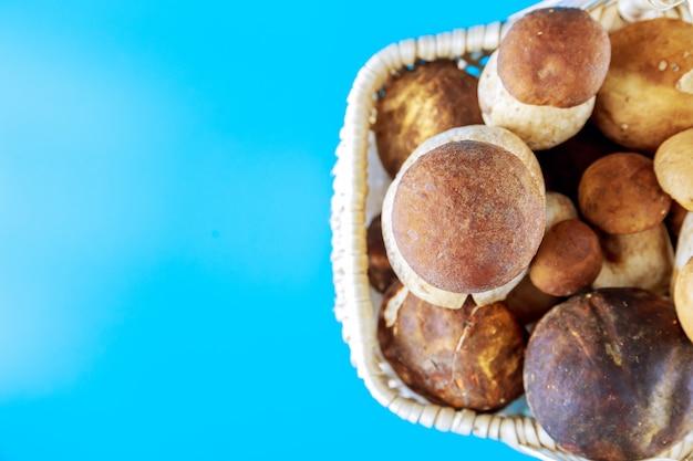 파란색 배경에 포르치니 버섯이 든 바구니입니다. 버섯 따기 시즌.