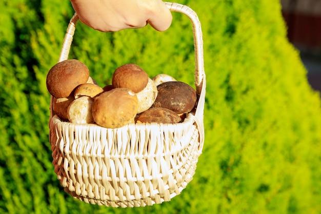 草の上にポルチーニ茸が入ったバスケット。きのこ狩りの季節。