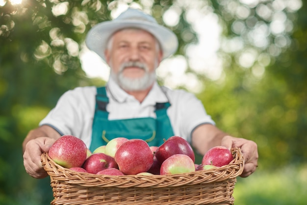 Basket with red apples in basket, farmer holdng it on background.