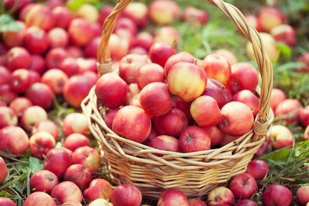 잔디에 빨간 사과 바구니