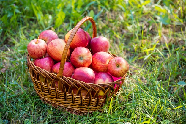 잔디에 붉은 익은 사과 바구니