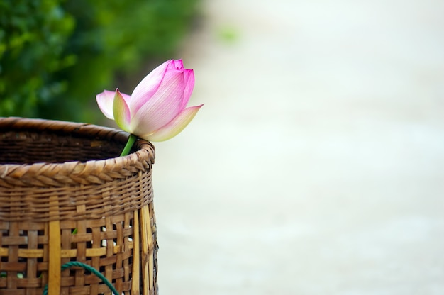 Baskets and lotus