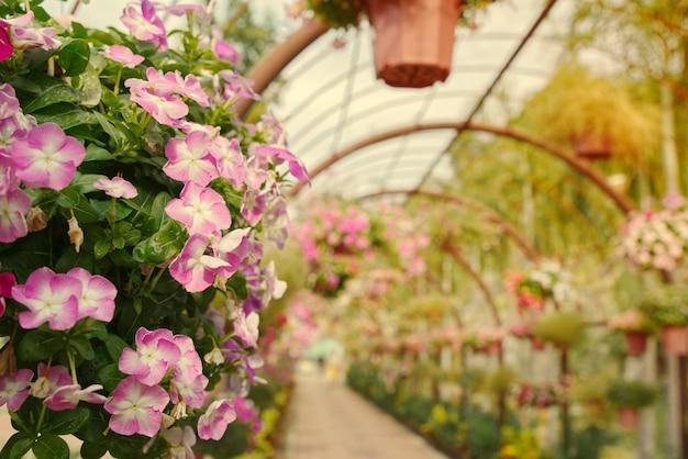 Корзины висят красивые цветы в арочный тоннель.