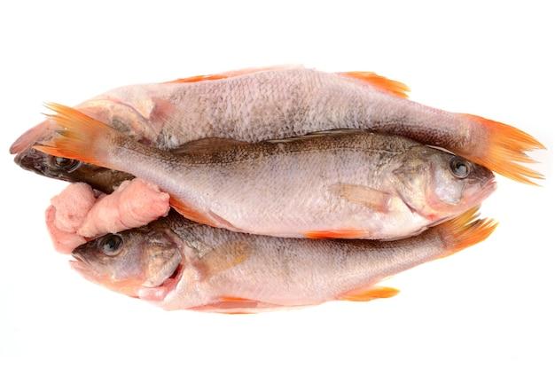 베이스 물고기 흰색 절연