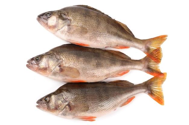 흰색 바탕에베이스 물고기 프리미엄 사진