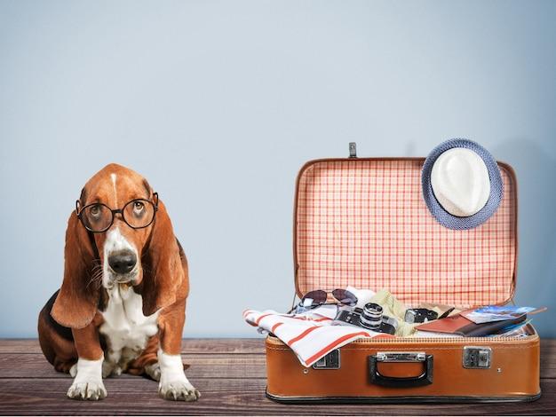 배경에 바셋 하운드 개와 여행 가방