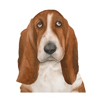 Basset hound dog watercolor illustration