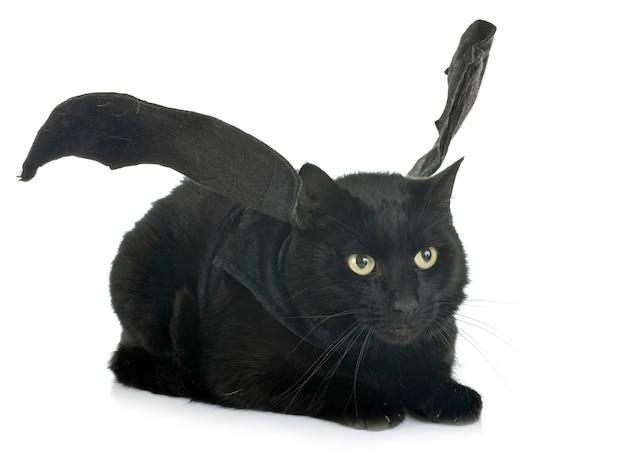 Летучая мышь кошка в студии