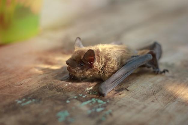 오후에 나무 테이블에 작은 박쥐