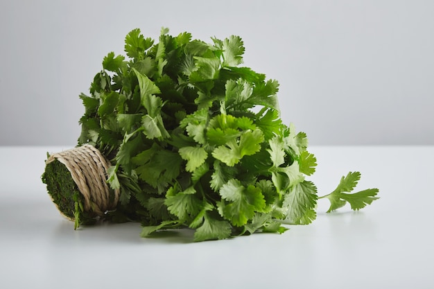Batch of fresh parsley, cilantro, tied with craft rope, isolated on whte table