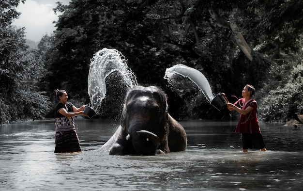 Bathing elephant live with happiness