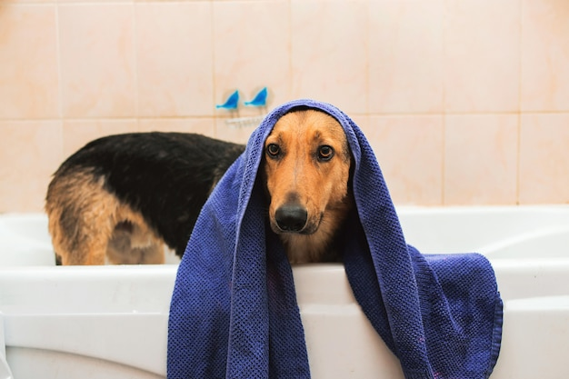 Bathing of the funny mixed breed dog.