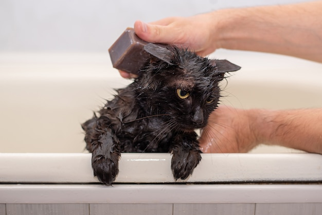 Bathing soaped with a wet black cat