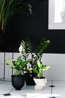 Интерьер ванной комнаты с комнатными растениями