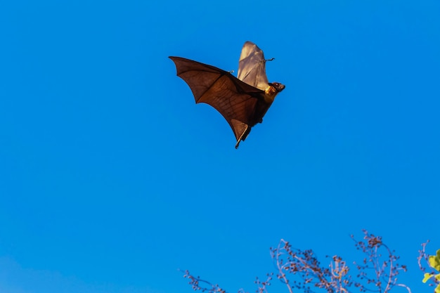 Bats are flying