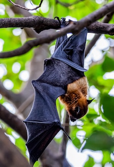 Bats are resting on tree