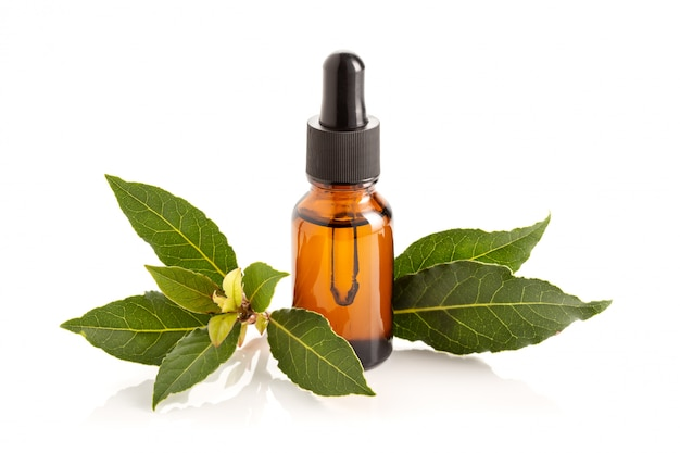 Bay essential oil isolated