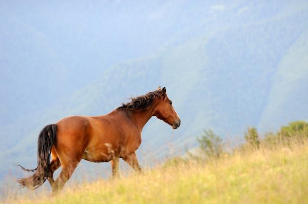Заливная лошадь скачет на зеленом лугу против гор