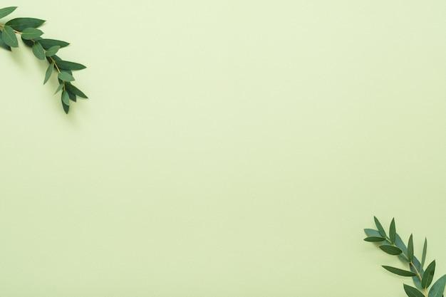 베이 잎 가지. 최소한의 식물 장식. 올리브 빛 배경에 공간을 복사합니다.