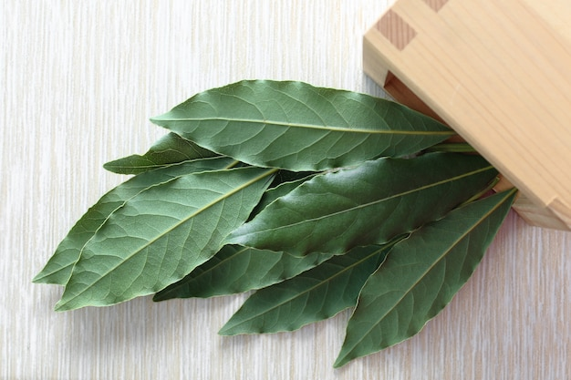 Bay leaf green. laurel or sweet bay in a wooden bowl on a gray table