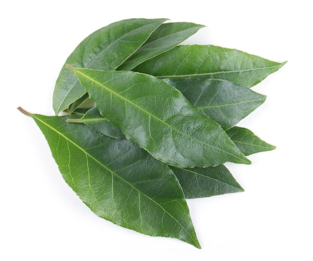 Bay leaves isolated on white background
