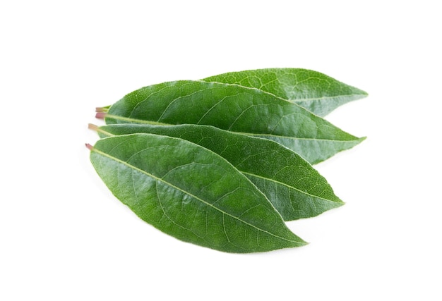 Bay leaves isolated on white surface