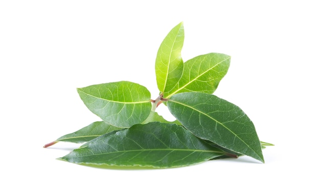 Bay leaves isolated on white