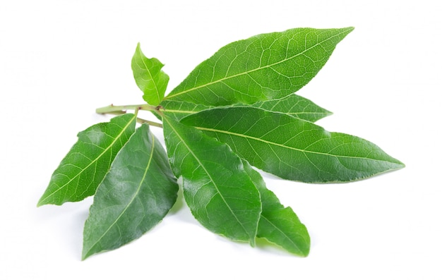 Bay leaves on white