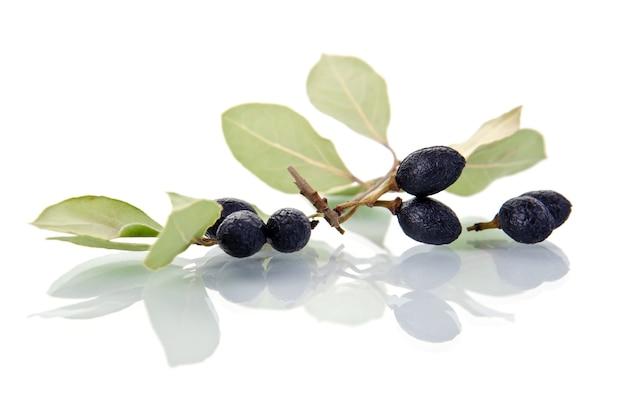白地に果物と月桂樹の葉