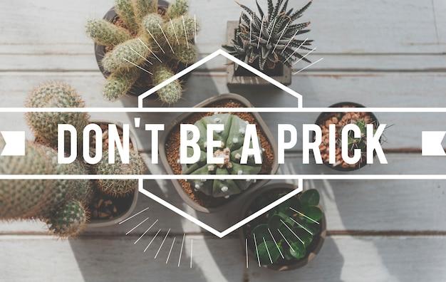Non essere un coglione con vista dall'alto di cactus in vaso
