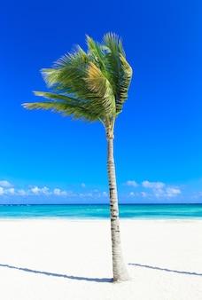 ビーチと美しい熱帯の海