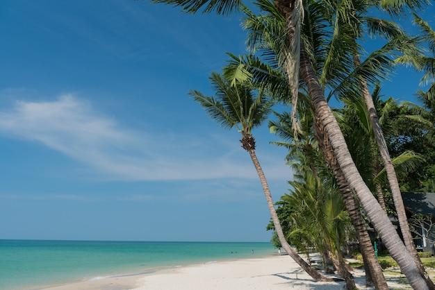 Пляж и море, праздник и отпуск, красивый тропический пляж с пальмами, белые облака с голубым небом