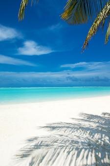 ビーチと熱帯の海。自然の背景