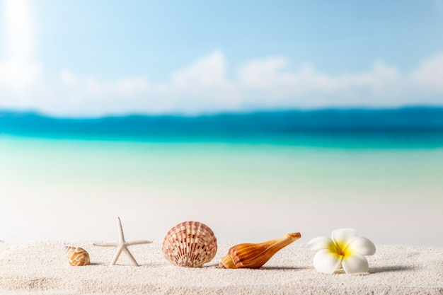 Beach background, summer background