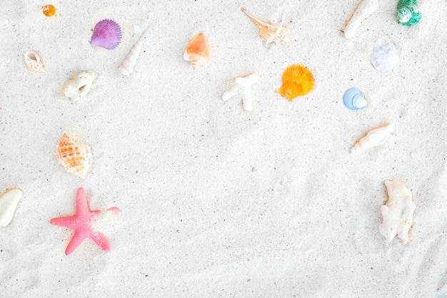 Beach background - top view of beach sand with shells and starfish.