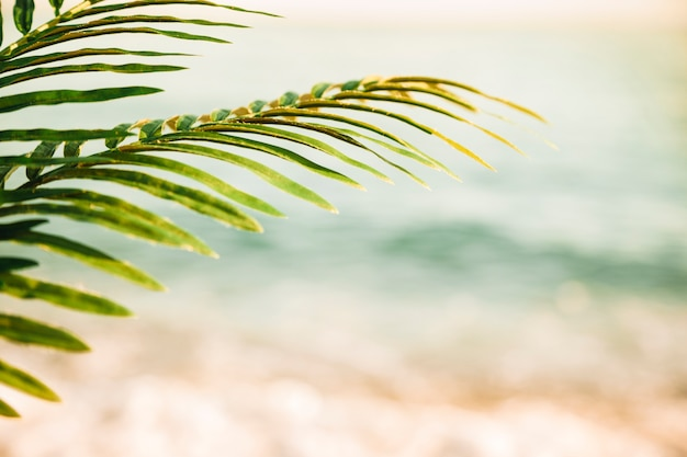 Beach background with palm leaf