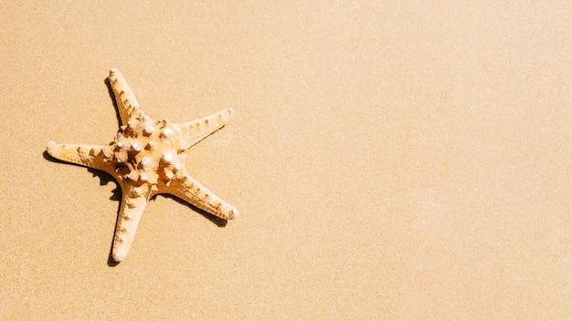 Sfondo spiaggia con stelle marine e copyspace