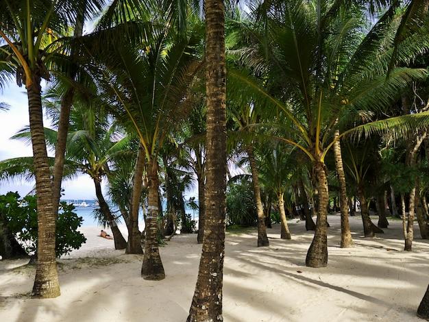 The beach on boracay island, philippines