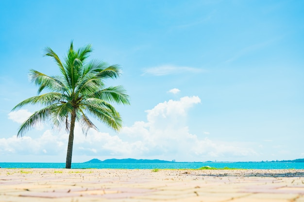 Beach and coconut palm tree with blue sky