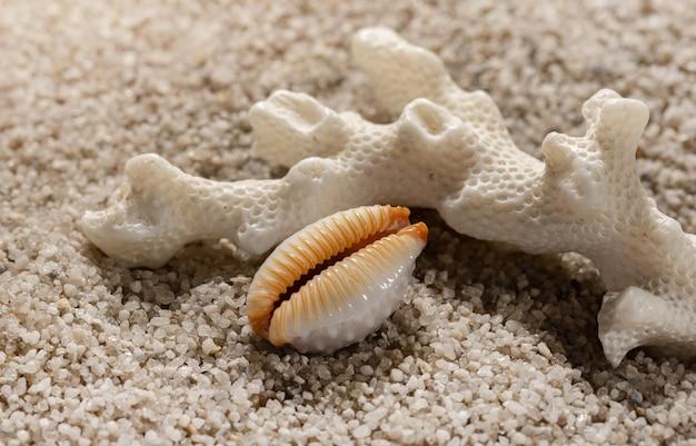 Композиция пляжа с морскими кораллами и ракушками на белом песке на фоне моря и отдыха