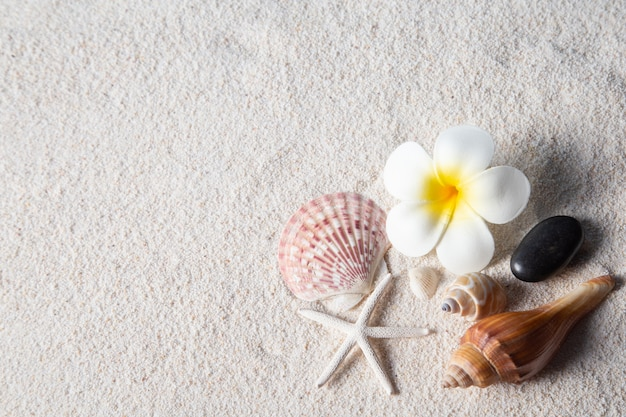 Beach composition with shells and flower