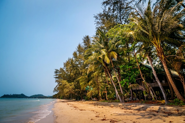 The beach on an exotic island..