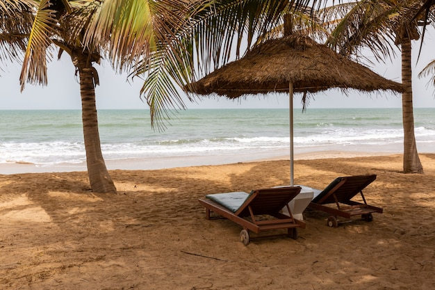 Beach in the gambia with thatch umbrellas palms and beach chairs with the sea on the background
