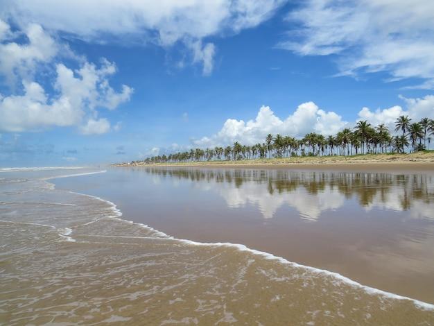 Пляжный пейзаж с кокосовыми пальмами на краю