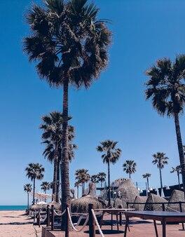 해변. 손바닥. 스페인. 여행 컨셉