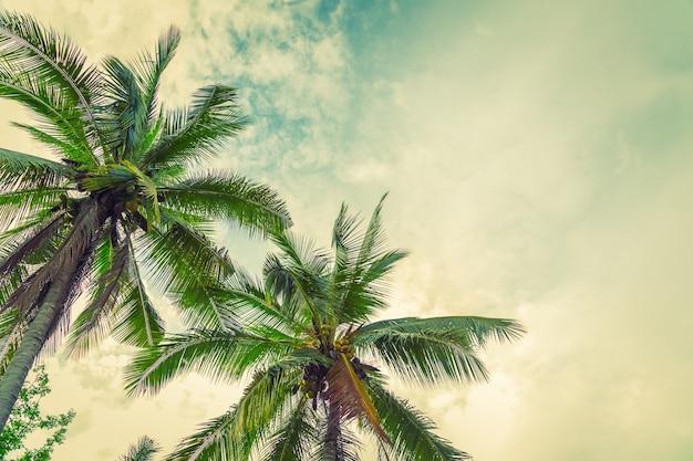 Beach palm tree from below