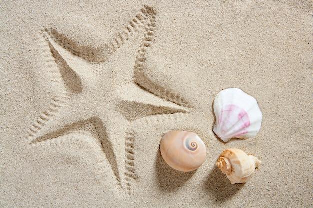 Beach sand starfish print shells and sea snail summer