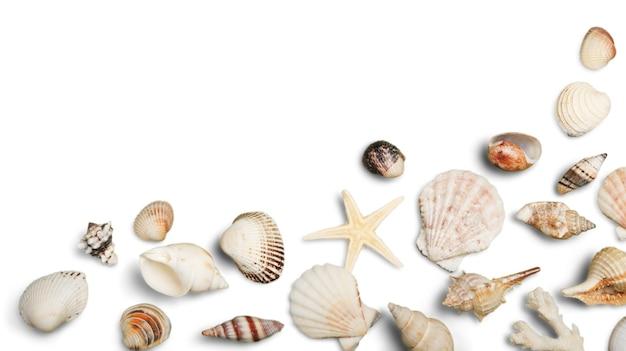 해변 모래, 불가사리, 흰색 배경 hz에 조개 모서리 테두리