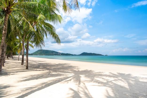 Пляж, морской песок и пальмы в летний день